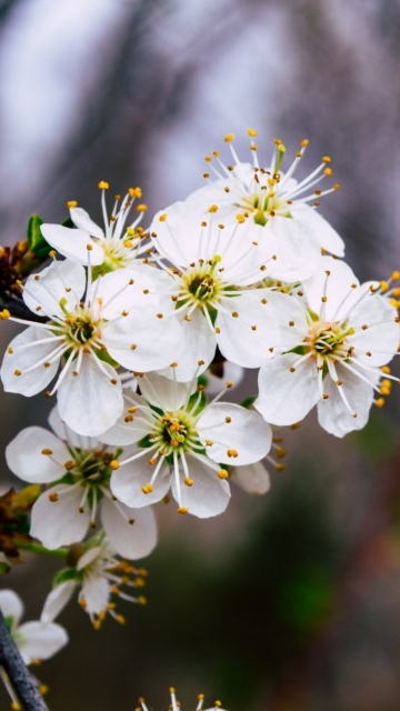 White Flowers Close Up Photography Image