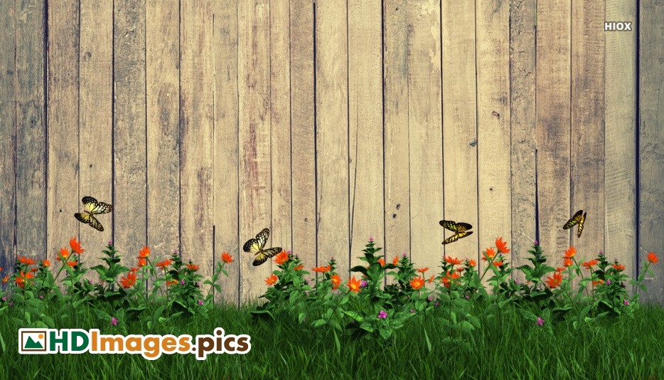 Flowers and Butterflies Hd Images