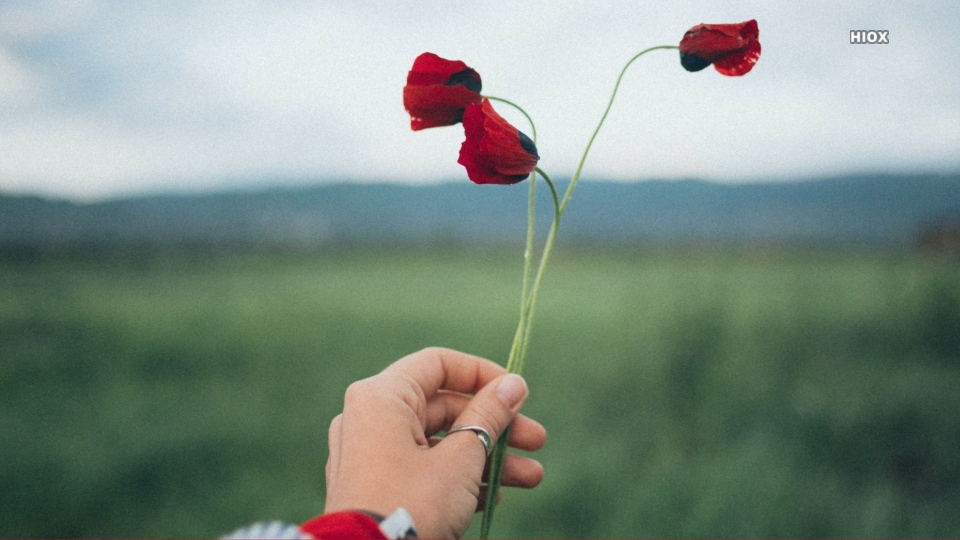 Hand Holding Red Flowers Hd Background