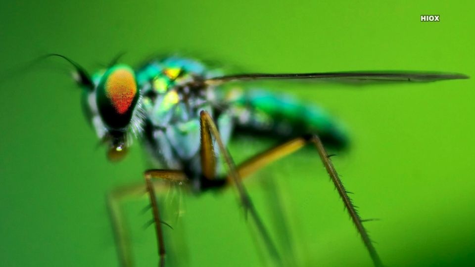 Hd Focus Photo Of Green Dragonfly Wallpaper