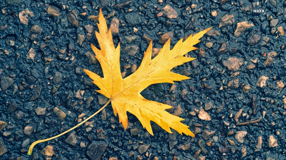 Leaves On Road HD Images