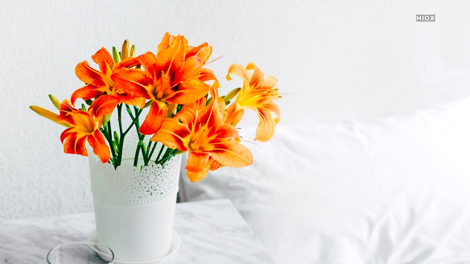 Flower Vase Images HD Download