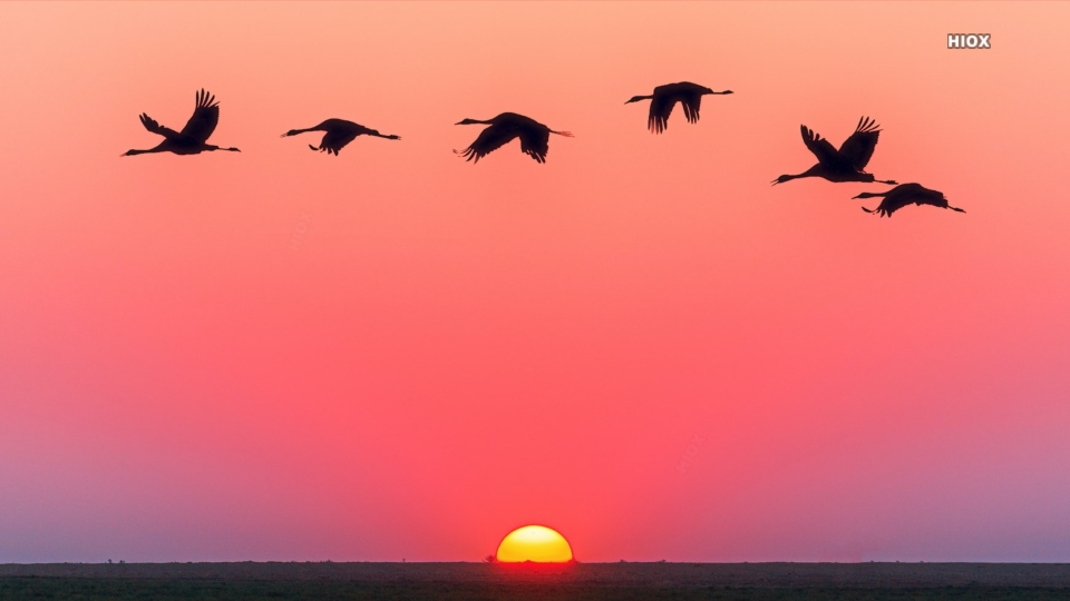 Pink Sunset And Birds Hd Background