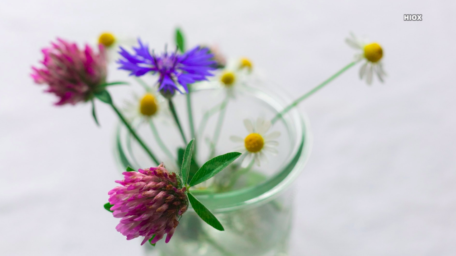 Photo of Purple And Pink Flowers In Clear Glass Vase