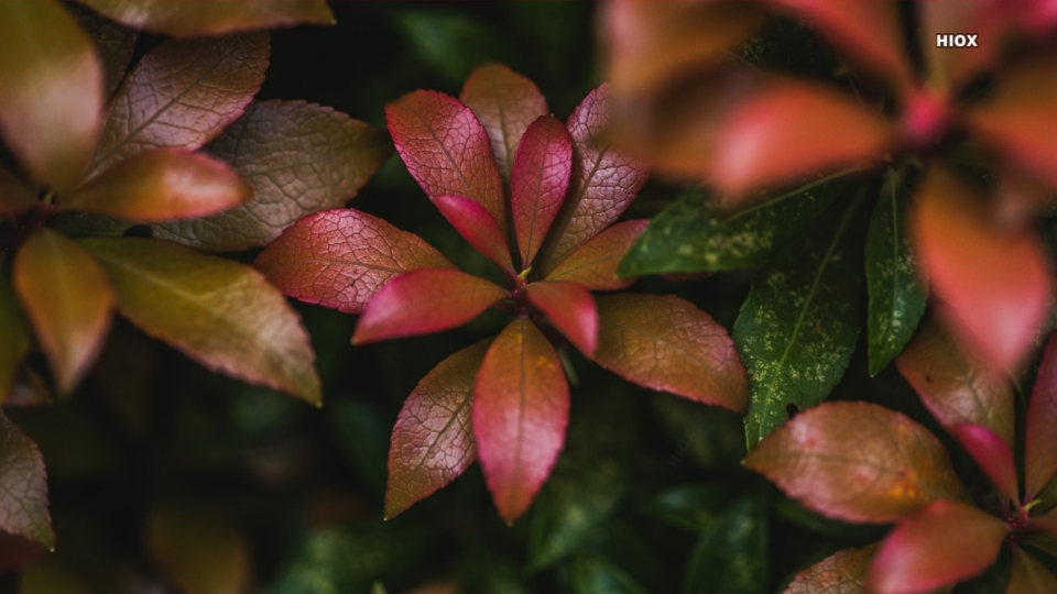 Leafy Plant HD Images