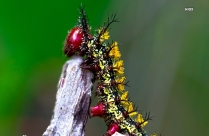HD Picture Of Colorful Caterpillar On Gray Wood