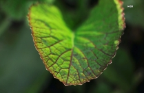 Focus HD Photography Of Green Leaves