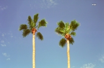 HD Photography Of Green Palm Trees Under Blue Sky