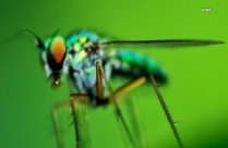 Hd Focus Photo Of Green Dragonfly