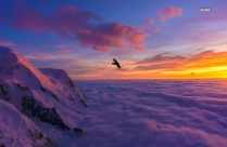 Bird Flying On Snow Covered Mountain Hd Image