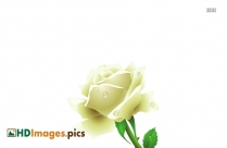 HD White Background Images For Free Download