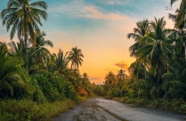 Coconut Trees on Country Road HD Wallpaper