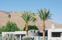 HD Photography Of Palm Trees Beside Concrete Building