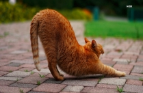 Tabby Cat Stretching On Brick Floor HD Picture