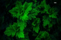 Top View Photo Of Green Leaves With Water Droplets