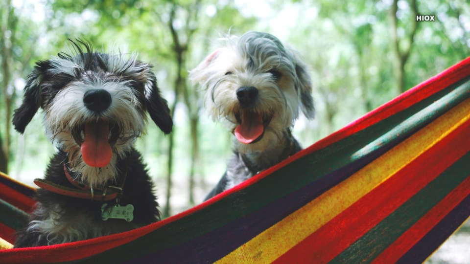 Two Puppies HD Images
