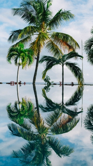 Ultra HD Photo Of Palm Trees Reflection In Water