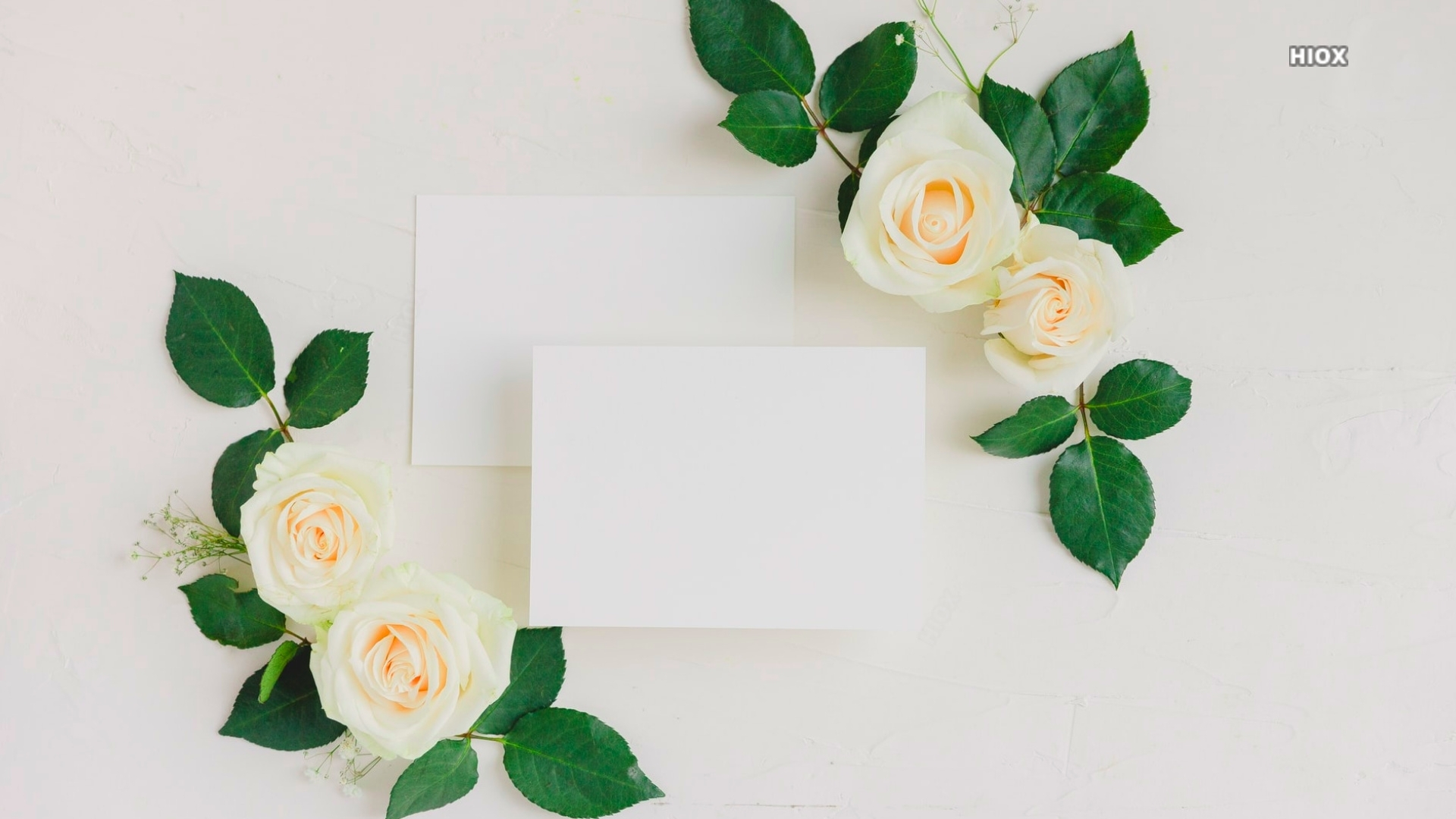 White Papers And  Roses Hd Background